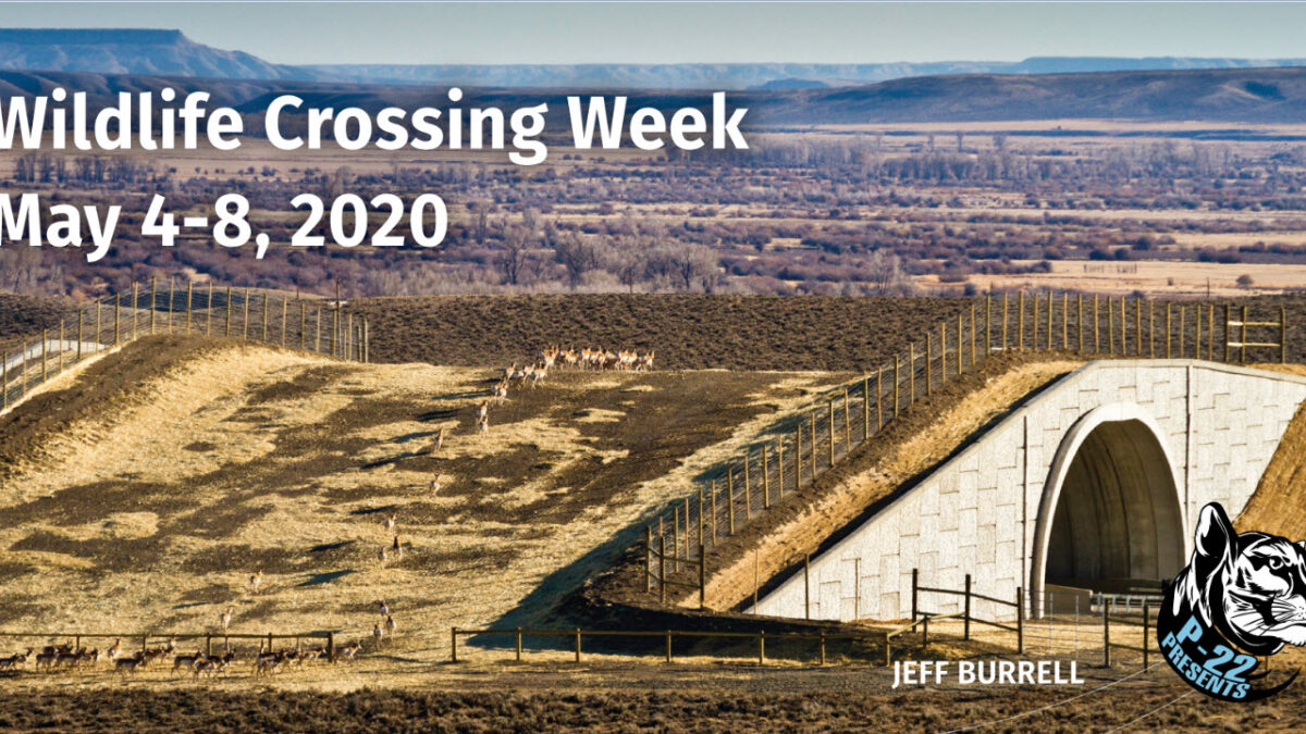 Celebrate Wildlife Crossing Week Online