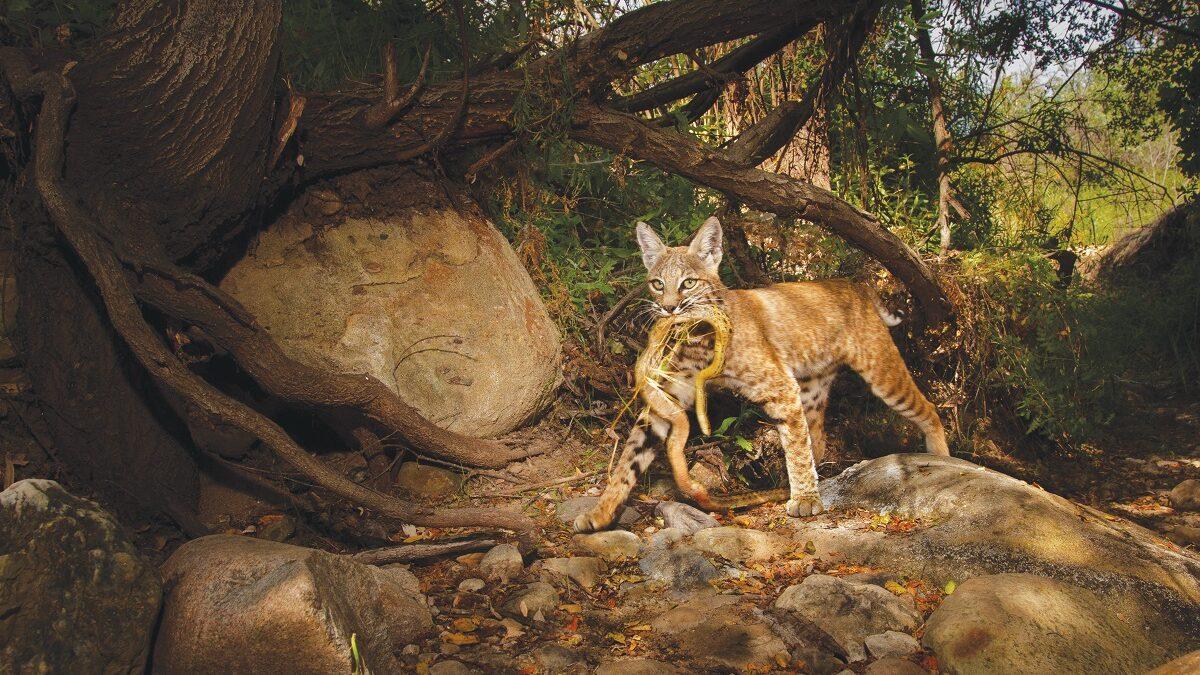 Jasper Baur and the Digital Art of Camera-Trapping