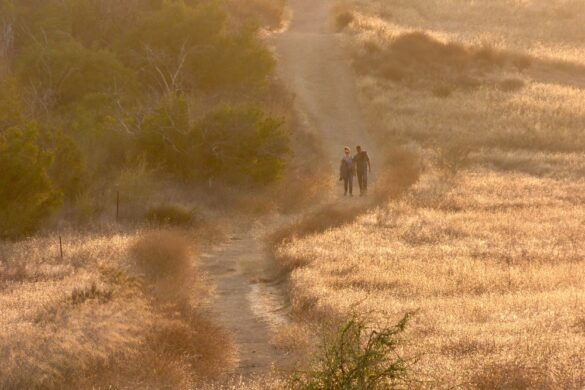 Trails have been crowded throughout the Santa Monica Mountains this summer, but one often has even the most popular trails to ones' self in the late afternoon, and this is arguably the most beautiful time of day in late summer.