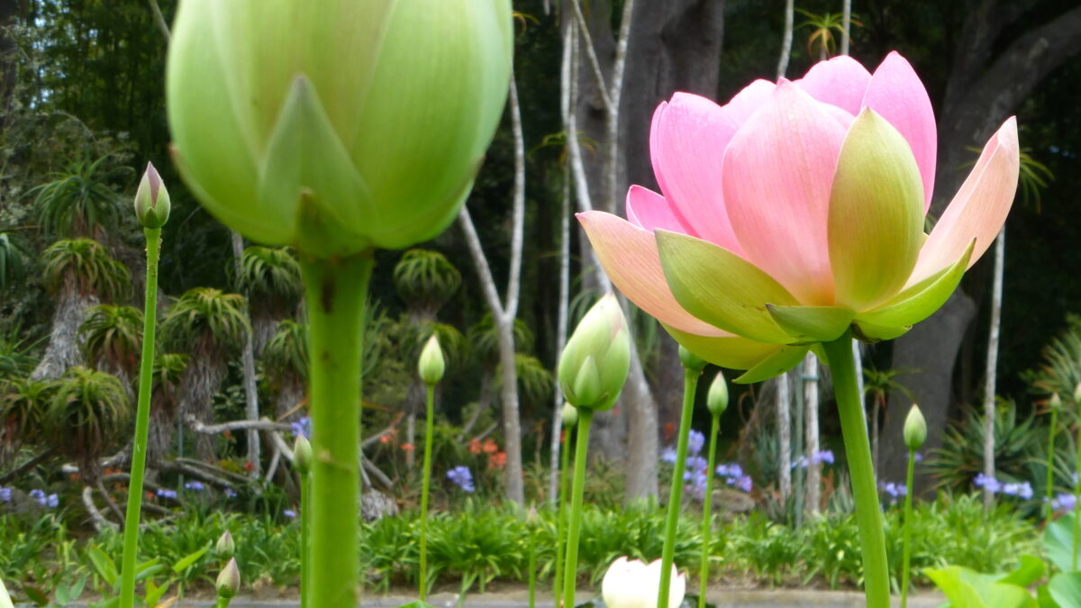 Botanical Gardens Are Open and in Bloom