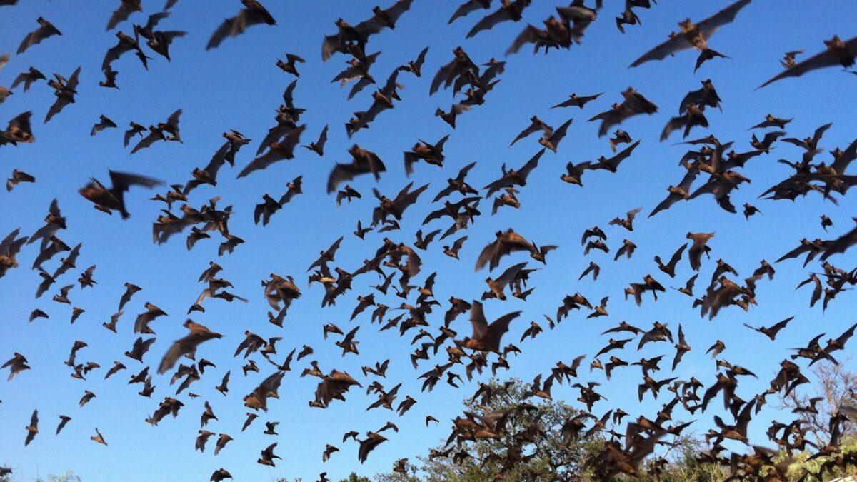 Topanga's Bats Are More Cute Than Scary