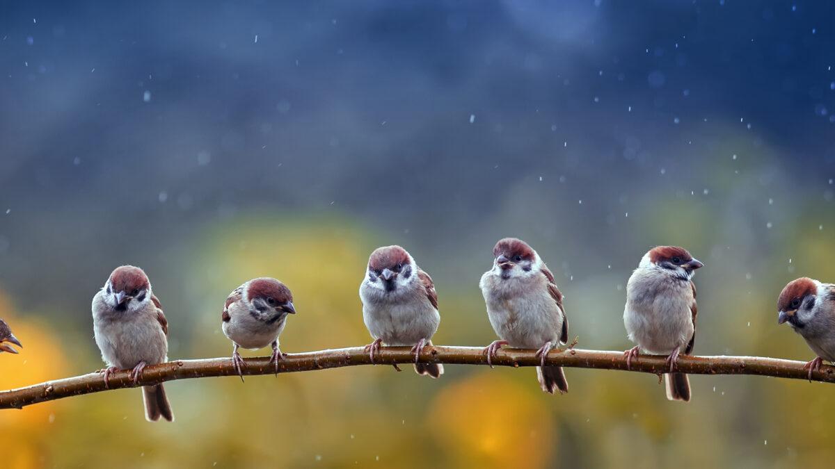 Birds in the Oaks