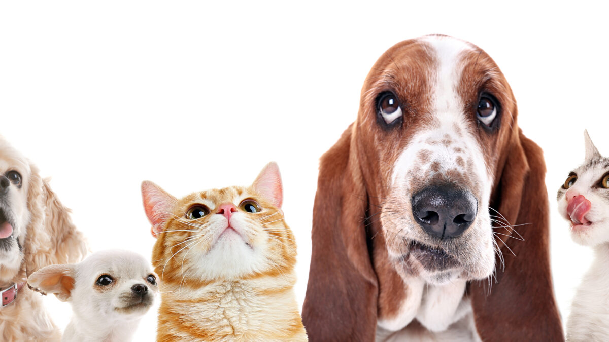 The Animal Clinic of Topanga Shares Pet Safety Tips