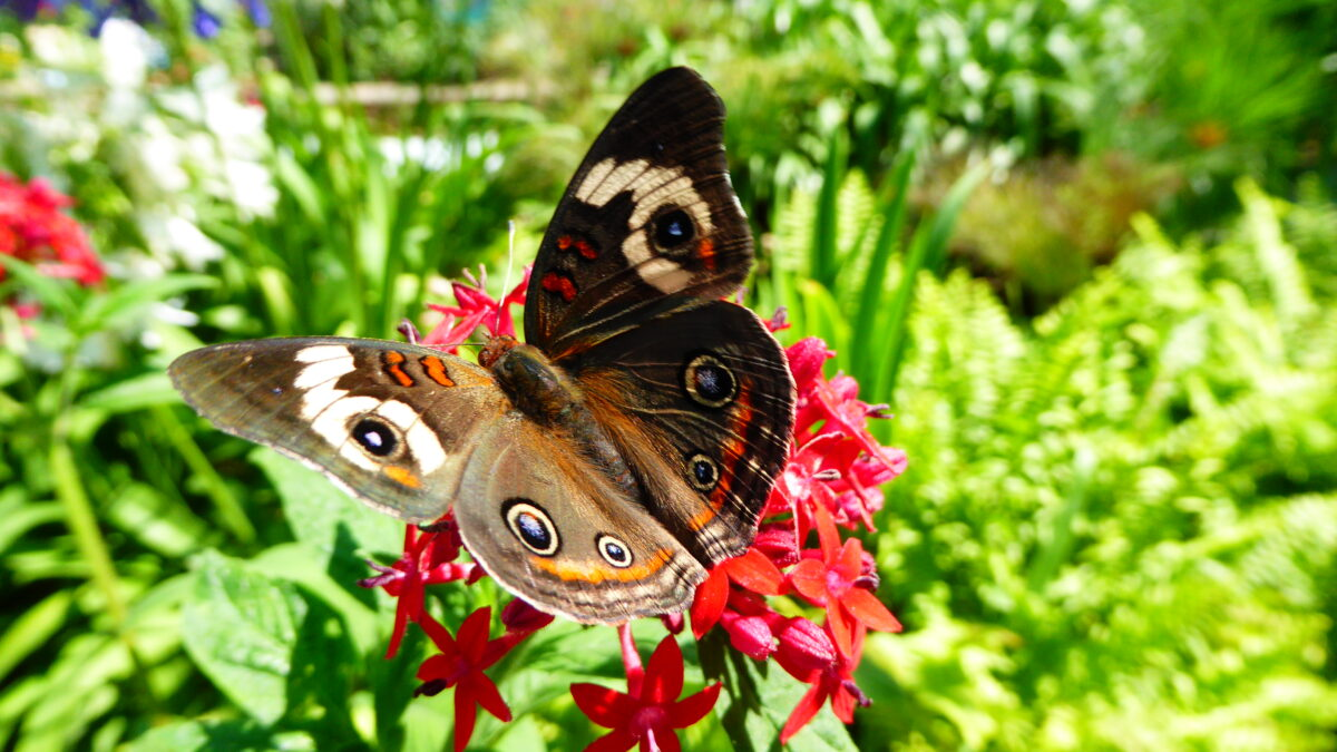 Natural History Museum Butterfly Pavilion and Nature Gardens Reopen