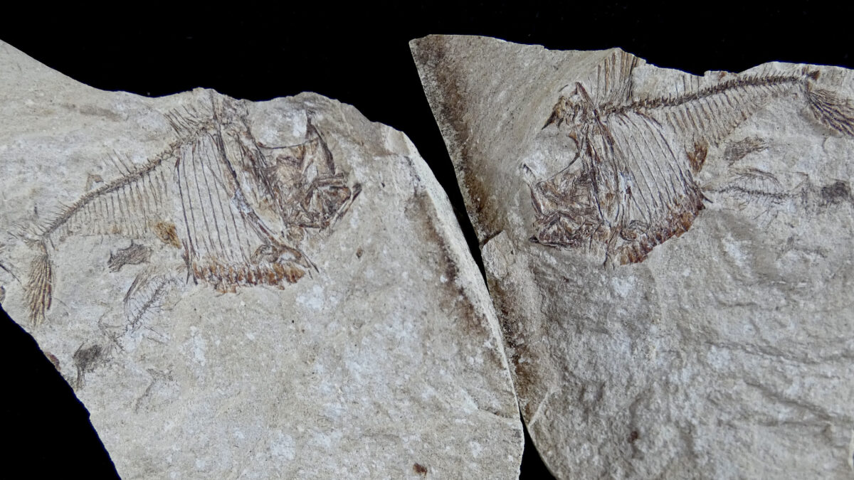 An Ocean Underfoot: Topanga's Fossils Record the History of Vanished Seas